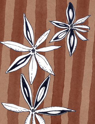 Star anise, illustration by Katherine Bird